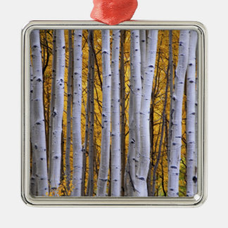 USA, Colorado, Rocky Mountains.  Intimate scene Metal Ornament