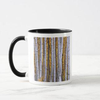 USA, Colorado, Rocky Mountains.  Intimate scene Mug