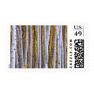 USA, Colorado, Rocky Mountains.  Intimate scene Postage Stamp