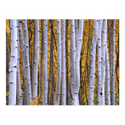 USA, Colorado, Rocky Mountains.  Intimate scene Postcards