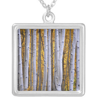 USA, Colorado, Rocky Mountains.  Intimate scene Silver Plated Necklace