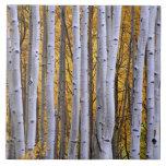 USA, Colorado, Rocky Mountains.  Intimate scene Ceramic Tile