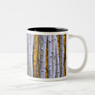 USA, Colorado, Rocky Mountains.  Intimate scene Two-Tone Coffee Mug