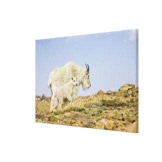 USA, Colorado, Rocky Mountains, Mount Evans, Canvas Print