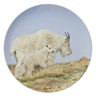 USA, Colorado, Rocky Mountains, Mount Evans, Dinner Plate