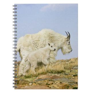 USA, Colorado, Rocky Mountains, Mount Evans, Notebook