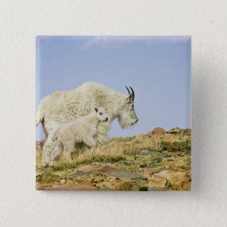 USA, Colorado, Rocky Mountains, Mount Evans, Pinback Button