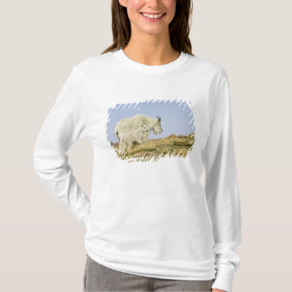 USA, Colorado, Rocky Mountains, Mount Evans, T-Shirt