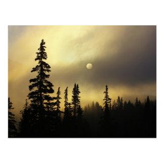 USA, Colorado, San Isabel National Forest. Postcard