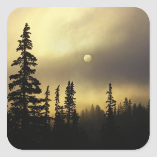 USA, Colorado, San Isabel National Forest. Square Sticker