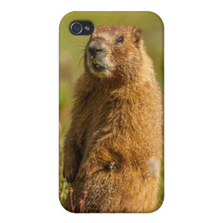 USA, Colorado, San Juan Mountains iPhone 4/4S Case