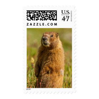 USA, Colorado, San Juan Mountains Stamp