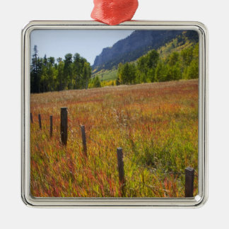 USA, Colorado, San Juan National Forest, along Metal Ornament