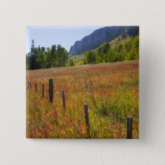 USA, Colorado, San Juan National Forest, along Pinback Button