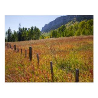 USA, Colorado, San Juan National Forest, along Postcard