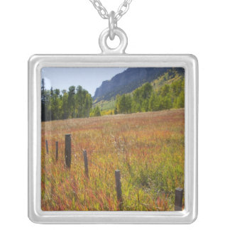 USA, Colorado, San Juan National Forest, along Silver Plated Necklace
