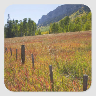 USA, Colorado, San Juan National Forest, along Square Sticker