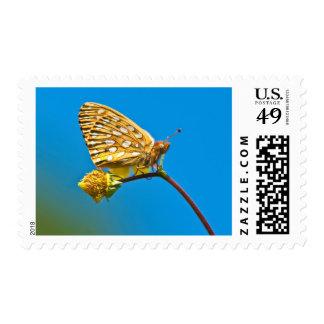 USA, Colorado. Skipper butterfly on flower stem Postage