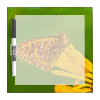 USA, Colorado. Skipper butterfly on sunflower Dry-Erase Board