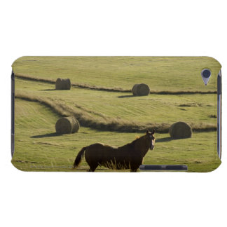 USA, Colorado, Steamboat Springs, hay rolls and Barely There iPod Case