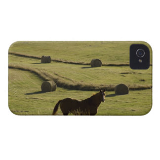 USA, Colorado, Steamboat Springs, hay rolls and iPhone 4 Case-Mate Case