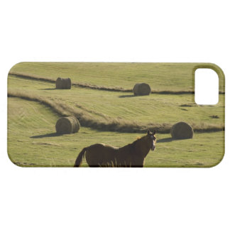 USA, Colorado, Steamboat Springs, hay rolls and iPhone SE/5/5s Case