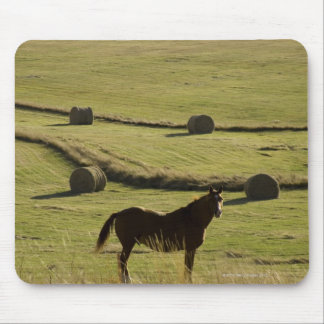 USA, Colorado, Steamboat Springs, hay rolls and Mouse Pad