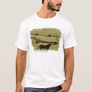 USA, Colorado, Steamboat Springs, hay rolls and T-Shirt