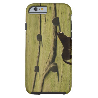 USA, Colorado, Steamboat Springs, hay rolls and Tough iPhone 6 Case