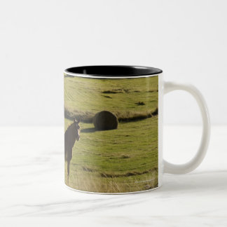 USA, Colorado, Steamboat Springs, hay rolls and Two-Tone Coffee Mug