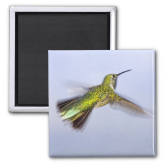 USA, Colorado, Summit County, Heeney. Back 2 Inch Square Magnet