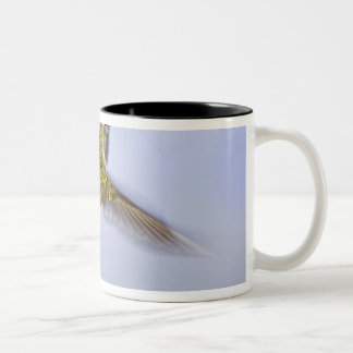 USA, Colorado, Summit County, Heeney. Back Two-Tone Coffee Mug