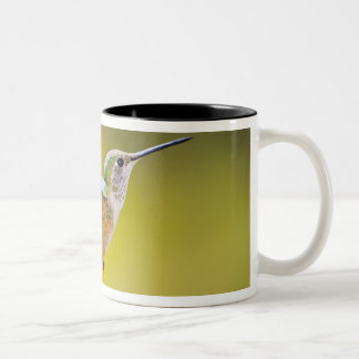 USA, Colorado, Summit County, Heeney. Side view Two-Tone Coffee Mug