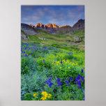 USA, Colorado. Sunrise On Wildflowers Poster