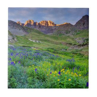 USA, Colorado. Sunrise On Wildflowers Tile