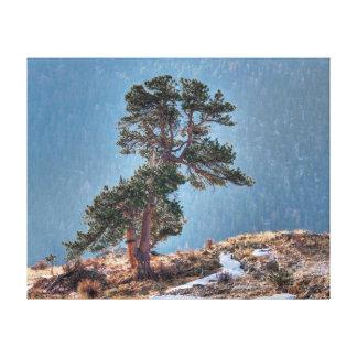 USA, Colorado, Tree In Estes Park Canvas Print