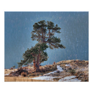 USA, Colorado, Tree In Estes Park Poster