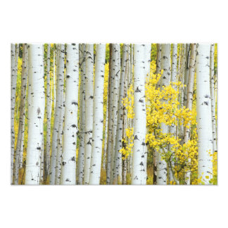 USA, Colorado, White River National Forest, Photo Print