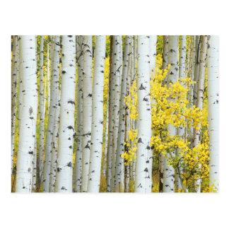 USA, Colorado, White River National Forest, Postcard
