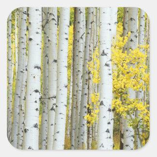 USA, Colorado, White River National Forest, Square Sticker