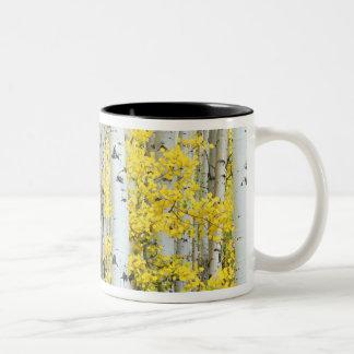 USA, Colorado, White River National Forest, Two-Tone Coffee Mug