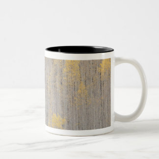 USA, Colorado, White River National Forest. Two-Tone Coffee Mug