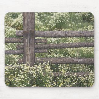 USA, Colorado, Wild Chamomile around log fence Mouse Pad