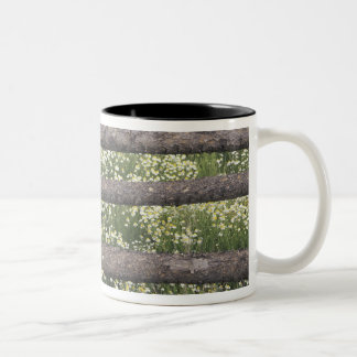 USA, Colorado, Wild Chamomile around log fence Two-Tone Coffee Mug