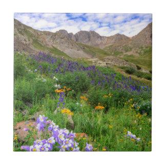 USA, Colorado. Wildflowers In American Basin Ceramic Tile