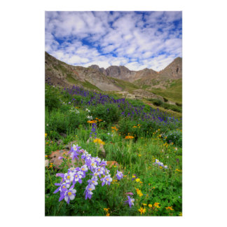 USA, Colorado. Wildflowers In American Basin Poster