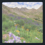 """USA, Colorado. Wildflowers In American Basin Stone Coaster<br><div class=""""desc"""">Jaynes Gallery / DanitaDelimont.com USA,  North America,  Colorado</div>"""