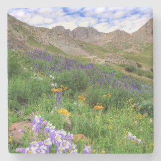 USA, Colorado. Wildflowers In American Basin Stone Coaster