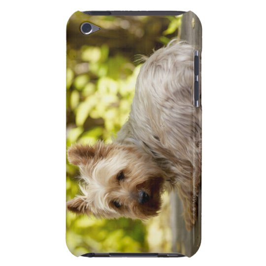 USA, Colorado, Yorkshire terrier lying down and iPod Touch Cover