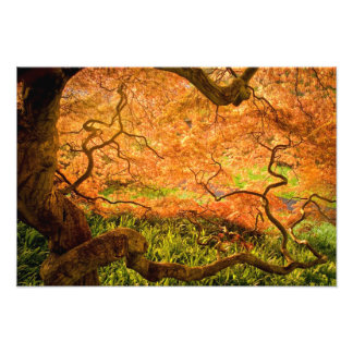 USA, Delaware, Wilmington. Japanese maple Photographic Print